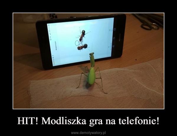 HIT! Modliszka gra na telefonie! –