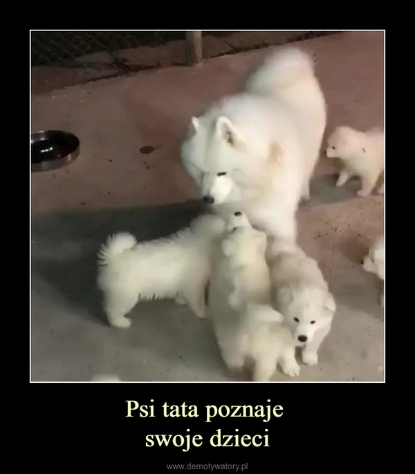 Psi tata poznaje swoje dzieci –