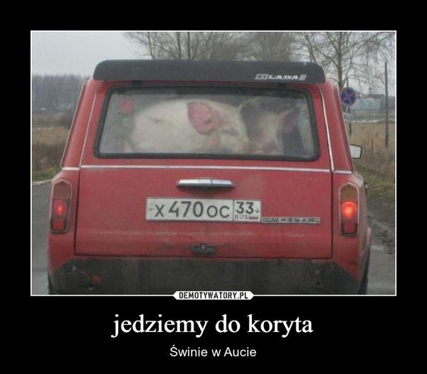 jedziemy do koryta – Świnie w Aucie