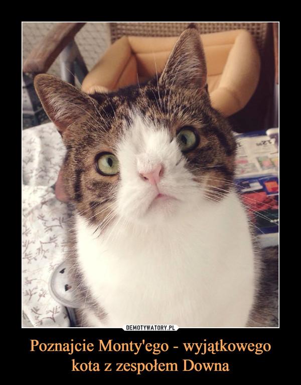 Poznajcie Monty'ego - wyjątkowego kota z zespołem Downa –