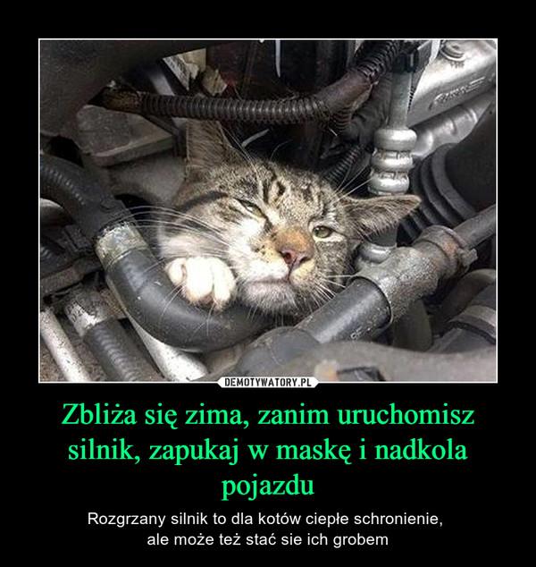 Zbliża się zima, zanim uruchomisz silnik, zapukaj w maskę i nadkola pojazdu – Rozgrzany silnik to dla kotów ciepłe schronienie, ale może też stać sie ich grobem