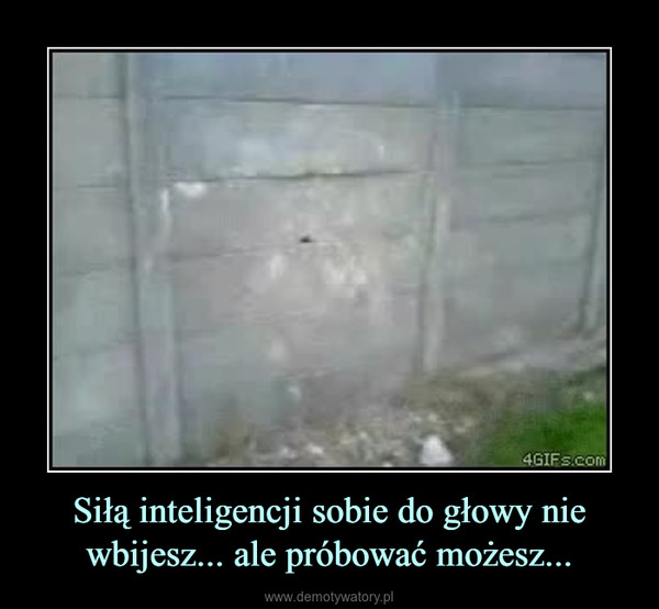 Siłą inteligencji sobie do głowy nie wbijesz... ale próbować możesz... –