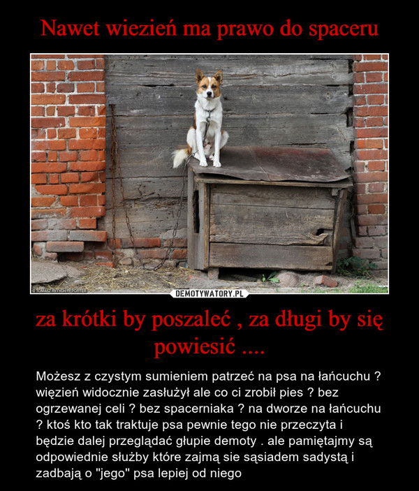 za krótki by poszaleć , za długi by się powiesić .... – Możesz z czystym sumieniem patrzeć na psa na łańcuchu ? więzień widocznie zasłużył ale co ci zrobił pies ? bez ogrzewanej celi ? bez spacerniaka ? na dworze na łańcuchu ? ktoś kto tak traktuje psa pewnie tego nie przeczyta i będzie dalej przeglądać głupie demoty . ale pamiętajmy są odpowiednie służby które zajmą sie sąsiadem sadystą i zadbają o ''jego'' psa lepiej od niego