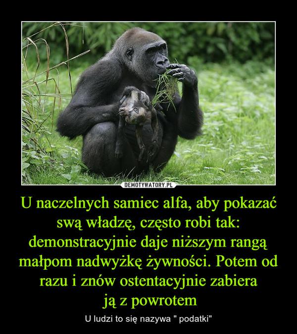 """U naczelnych samiec alfa, aby pokazać swą władzę, często robi tak: demonstracyjnie daje niższym rangą małpom nadwyżkę żywności. Potem od razu i znów ostentacyjnie zabiera ją z powrotem – U ludzi to się nazywa """" podatki"""""""