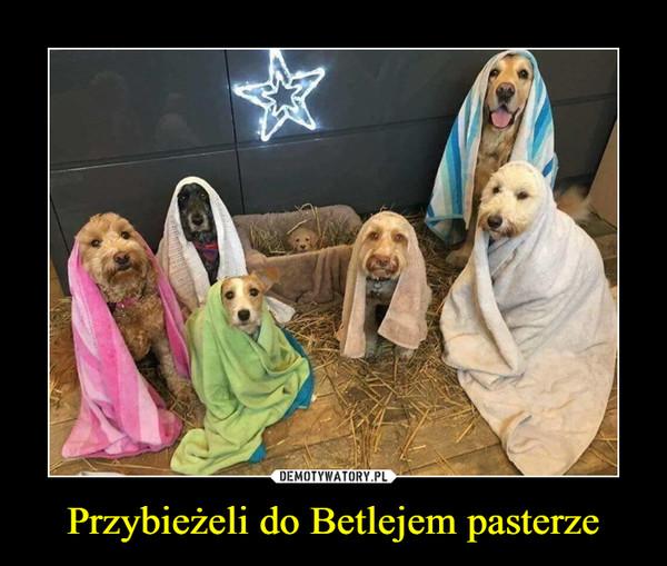 Przybieżeli do Betlejem pasterze –