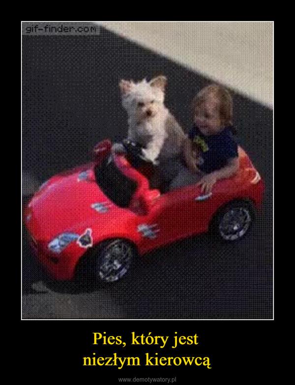 Pies, który jest niezłym kierowcą –