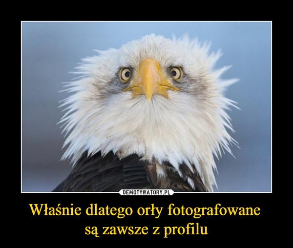 Właśnie dlatego orły fotografowane  są zawsze z profilu