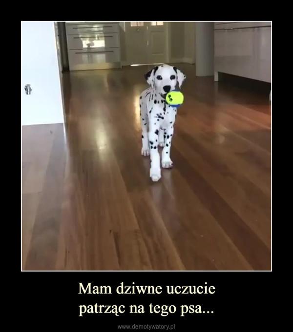 Mam dziwne uczuciepatrząc na tego psa... –