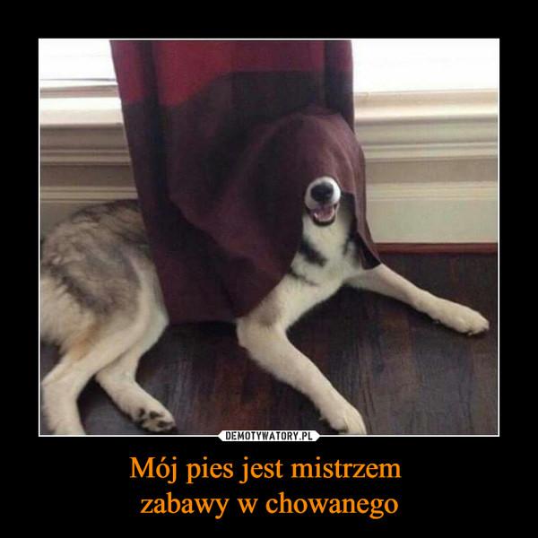 Mój pies jest mistrzem zabawy w chowanego –