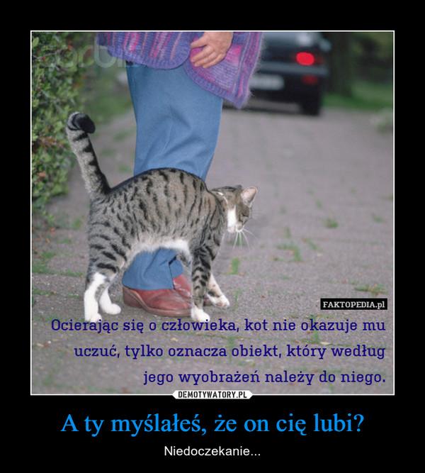 A ty myślałeś, że on cię lubi? – Niedoczekanie... FAKTOPEDIA.PLOcierając się o człowieka, kot nie okazuje uczuć, tylko oznacza obiekt, który według jego wyobrażeń należy do niego.