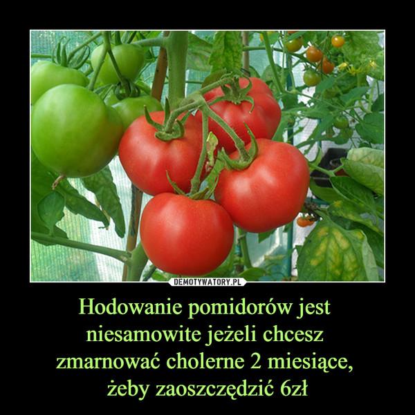 Hodowanie pomidorów jest niesamowite jeżeli chcesz zmarnować cholerne 2 miesiące, żeby zaoszczędzić 6zł –