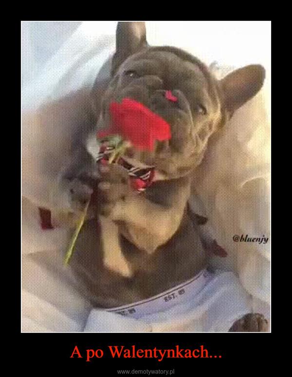 A po Walentynkach... –