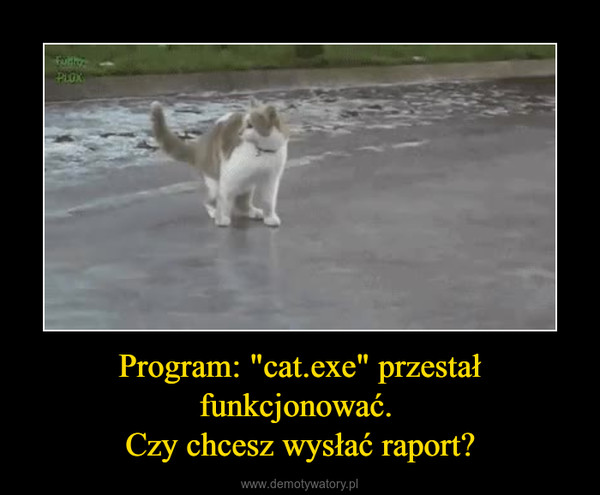 """Program: """"cat.exe"""" przestał funkcjonować. Czy chcesz wysłać raport? –"""