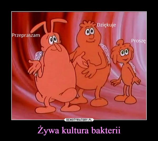 Żywa kultura bakterii –