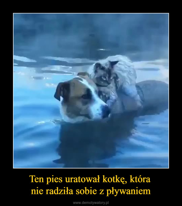 Ten pies uratował kotkę, która nie radziła sobie z pływaniem –