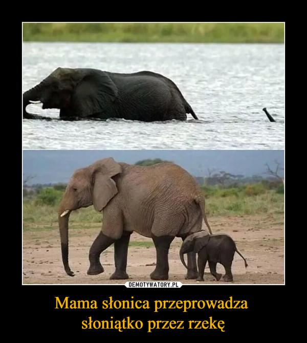 Mama słonica przeprowadza słoniątko przez rzekę –
