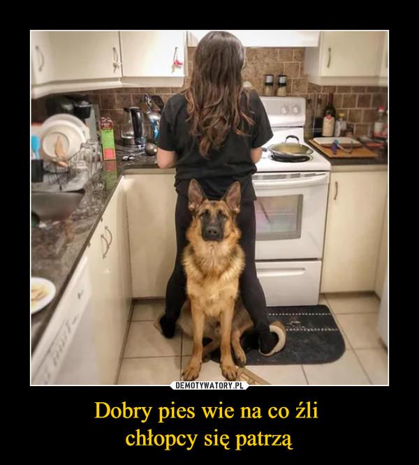 Dobry pies wie na co źli chłopcy się patrzą –