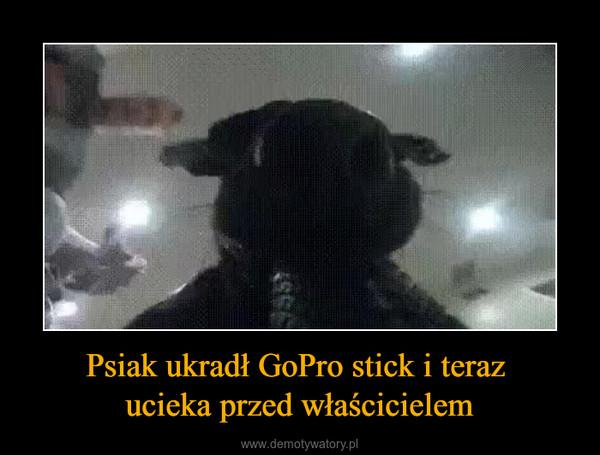 Psiak ukradł GoPro stick i teraz ucieka przed właścicielem –