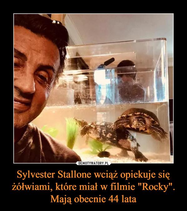 """Sylvester Stallone wciąż opiekuje się żółwiami, które miał w filmie """"Rocky"""". Mają obecnie 44 lata –"""