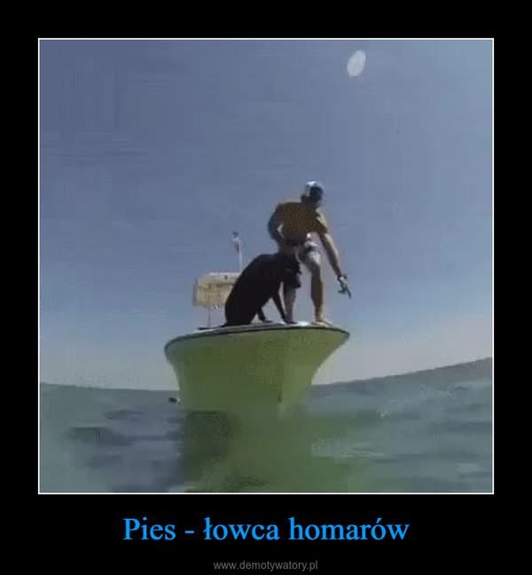 Pies - łowca homarów –