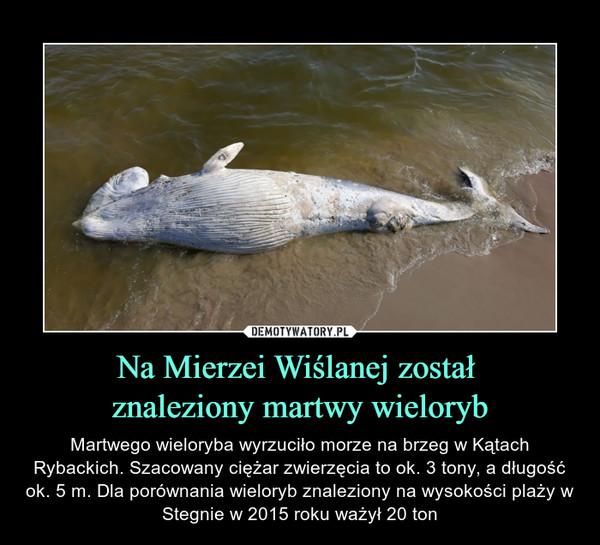 Na Mierzei Wiślanej został znaleziony martwy wieloryb – Martwego wieloryba wyrzuciło morze na brzeg w Kątach Rybackich. Szacowany ciężar zwierzęcia to ok. 3 tony, a długość ok. 5 m. Dla porównania wieloryb znaleziony na wysokości plaży w Stegnie w 2015 roku ważył 20 ton