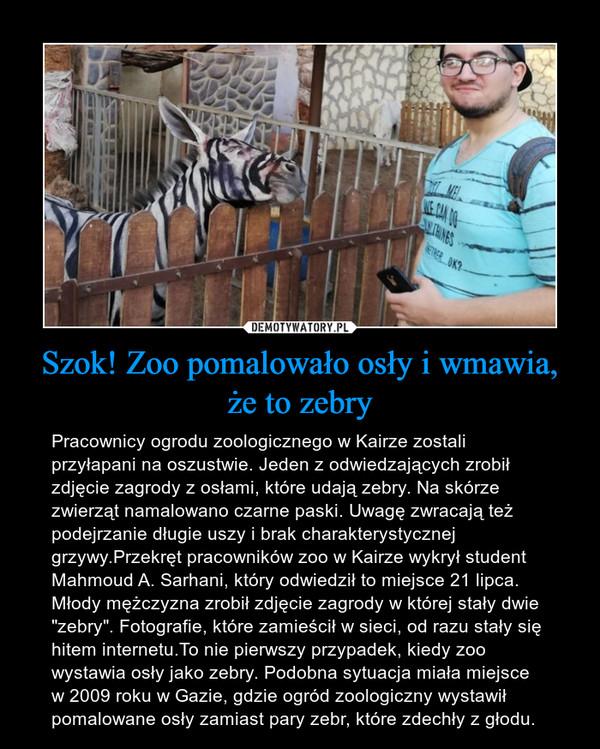 """Szok! Zoo pomalowało osły i wmawia, że to zebry – Pracownicy ogrodu zoologicznego w Kairze zostali przyłapani na oszustwie. Jeden z odwiedzających zrobił zdjęcie zagrody z osłami, które udają zebry. Na skórze zwierząt namalowano czarne paski. Uwagę zwracają też podejrzanie długie uszy i brak charakterystycznej grzywy.Przekręt pracowników zoo w Kairze wykrył student Mahmoud A. Sarhani, który odwiedził to miejsce 21 lipca. Młody mężczyzna zrobił zdjęcie zagrody w której stały dwie """"zebry"""". Fotografie, które zamieścił w sieci, od razu stały się hitem internetu.To nie pierwszy przypadek, kiedy zoo wystawia osły jako zebry. Podobna sytuacja miała miejsce w 2009 roku w Gazie, gdzie ogród zoologiczny wystawił pomalowane osły zamiast pary zebr, które zdechły z głodu."""