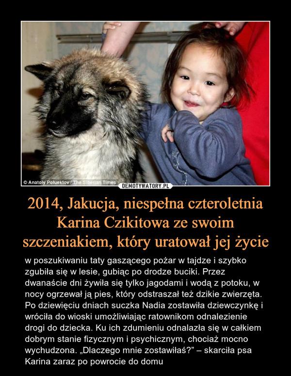 """2014, Jakucja, niespełna czteroletnia Karina Czikitowa ze swoim szczeniakiem, który uratował jej życie – w poszukiwaniu taty gaszącego pożar w tajdze i szybko zgubiła się w lesie, gubiąc po drodze buciki. Przez dwanaście dni żywiła się tylko jagodami i wodą z potoku, w nocy ogrzewał ją pies, który odstraszał też dzikie zwierzęta. Po dziewięciu dniach suczka Nadia zostawiła dziewczynkę i wróciła do wioski umożliwiając ratownikom odnalezienie drogi do dziecka. Ku ich zdumieniu odnalazła się w całkiem dobrym stanie fizycznym i psychicznym, chociaż mocno wychudzona. """"Dlaczego mnie zostawiłaś?"""" – skarciła psa Karina zaraz po powrocie do domu"""