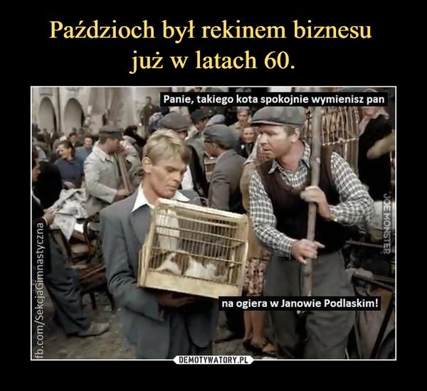 –  Panie, takiego kota spokojnie wymienisz pan na ogiera w Janowie Podlaskim!