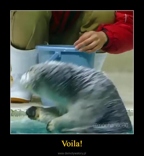 Voila! –