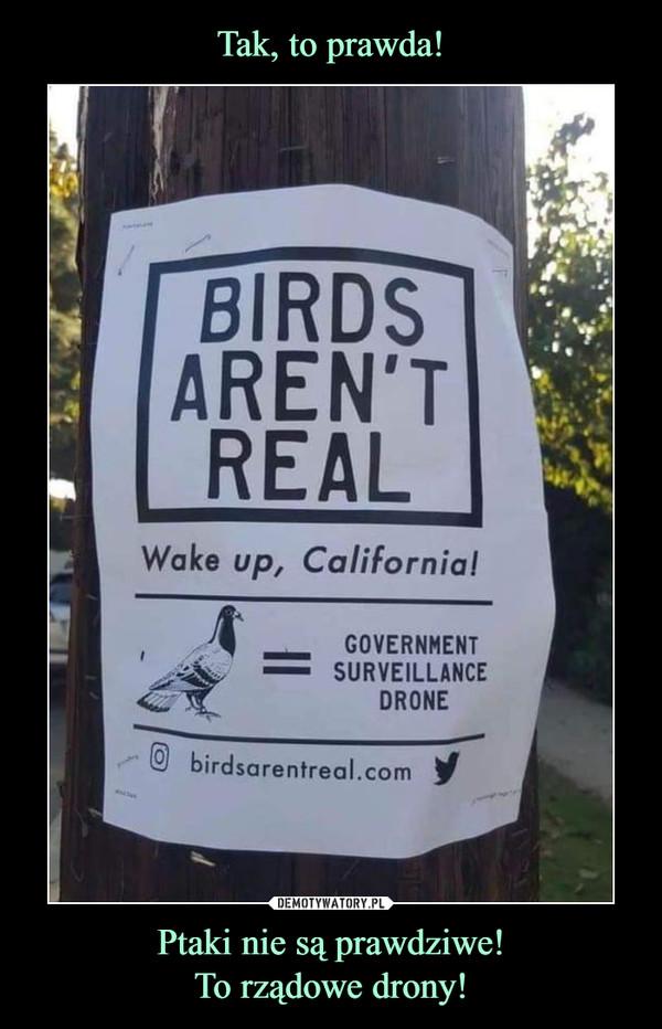 Ptaki nie są prawdziwe!To rządowe drony! –