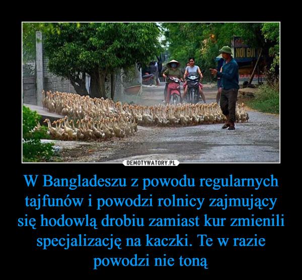 W Bangladeszu z powodu regularnych tajfunów i powodzi rolnicy zajmujący się hodowlą drobiu zamiast kur zmienili specjalizację na kaczki. Te w razie powodzi nie toną –