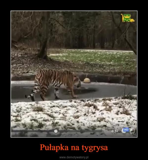 Pułapka na tygrysa –