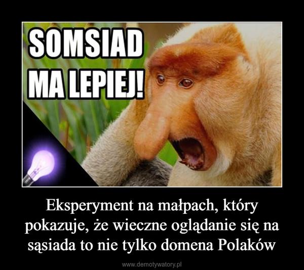 Eksperyment na małpach, który pokazuje, że wieczne oglądanie się na sąsiada to nie tylko domena Polaków –