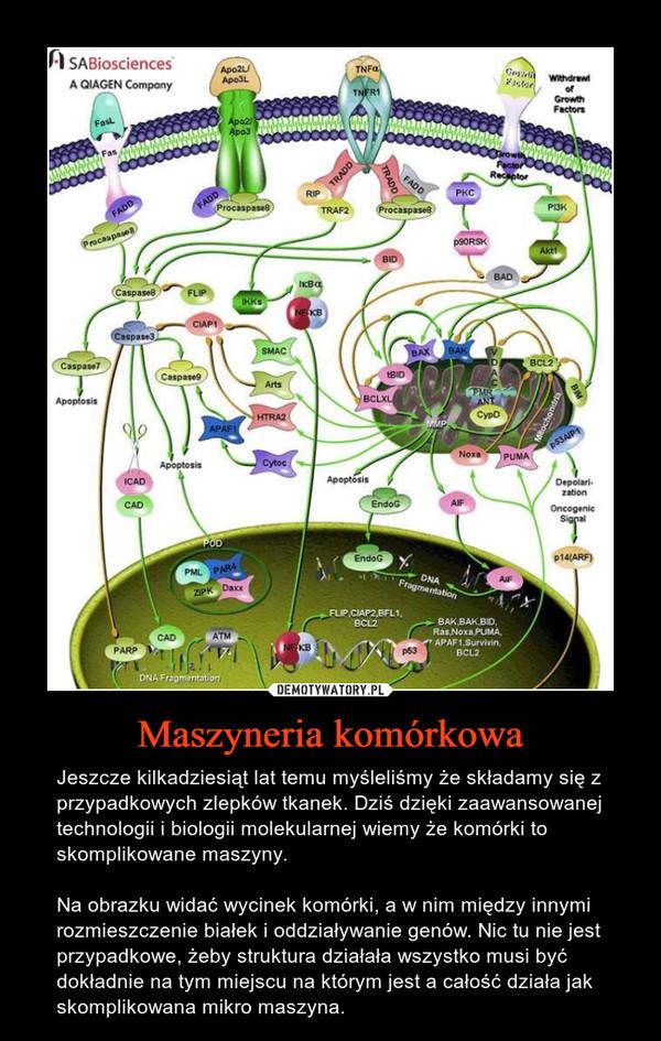 Maszyneria komórkowa – Jeszcze kilkadziesiąt lat temu myśleliśmy że składamy się z przypadkowych zlepków tkanek. Dziś dzięki zaawansowanej technologii i biologii molekularnej wiemy że komórki to skomplikowane maszyny.Na obrazku widać wycinek komórki, a w nim między innymi rozmieszczenie białek i oddziaływanie genów. Nic tu nie jest przypadkowe, żeby struktura działała wszystko musi być dokładnie na tym miejscu na którym jest a całość działa jak skomplikowana mikro maszyna.