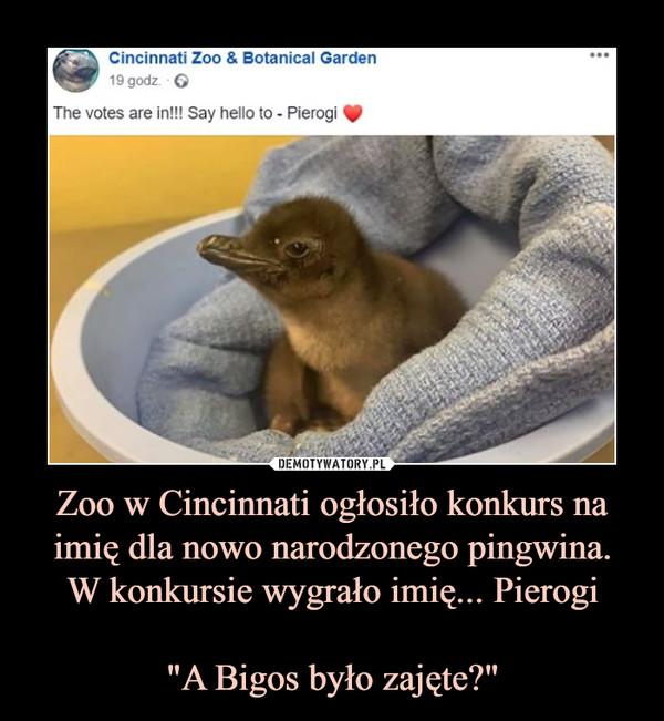 """Zoo w Cincinnati ogłosiło konkurs na imię dla nowo narodzonego pingwina.W konkursie wygrało imię... Pierogi""""A Bigos było zajęte?"""" –  Cincinnati Zoo & Botanical Garden The votes are in!!! Say hello to Pierogi"""