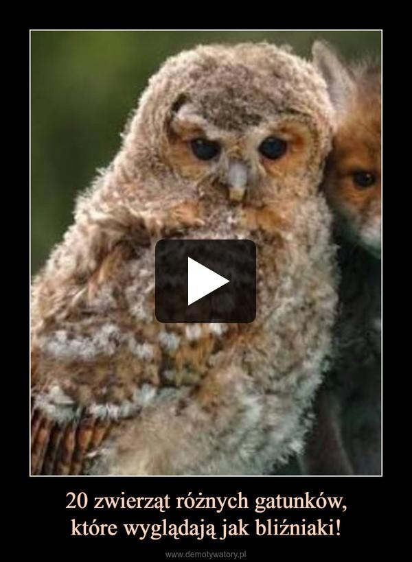 20 zwierząt różnych gatunków,które wyglądają jak bliźniaki! –