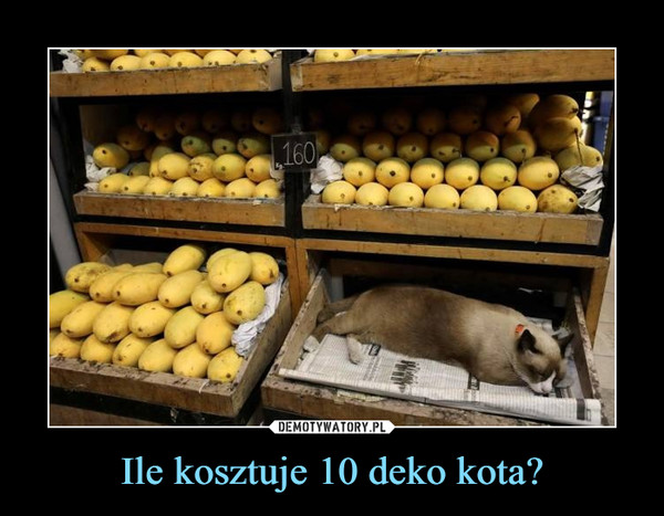 Ile kosztuje 10 deko kota? –