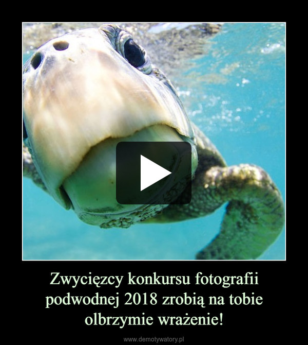 Zwycięzcy konkursu fotografii podwodnej 2018 zrobią na tobie olbrzymie wrażenie! –