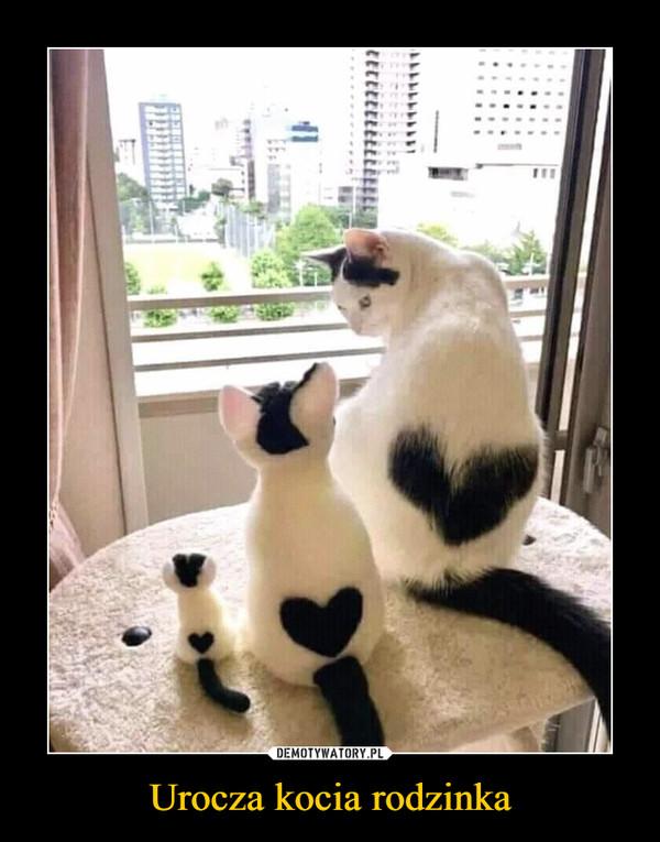 Urocza kocia rodzinka –