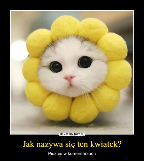 Jak nazywa się ten kwiatek? – Piszcie w komentarzach