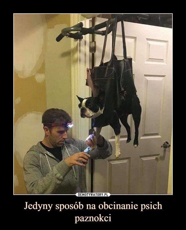 Jedyny sposób na obcinanie psich paznokci –