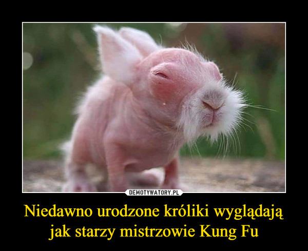 Niedawno urodzone króliki wyglądają jak starzy mistrzowie Kung Fu –