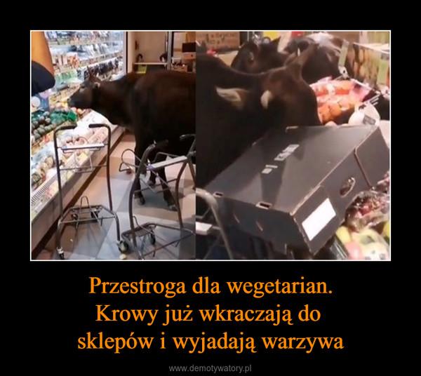 Przestroga dla wegetarian.Krowy już wkraczają do sklepów i wyjadają warzywa –