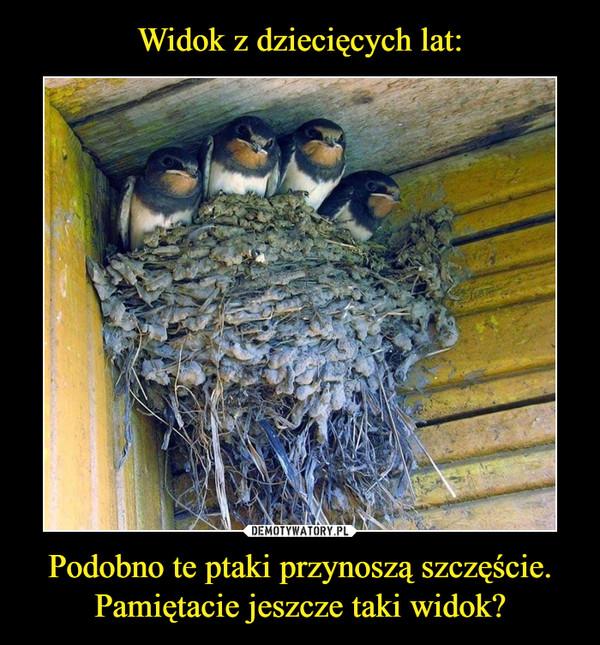 Podobno te ptaki przynoszą szczęście. Pamiętacie jeszcze taki widok? –