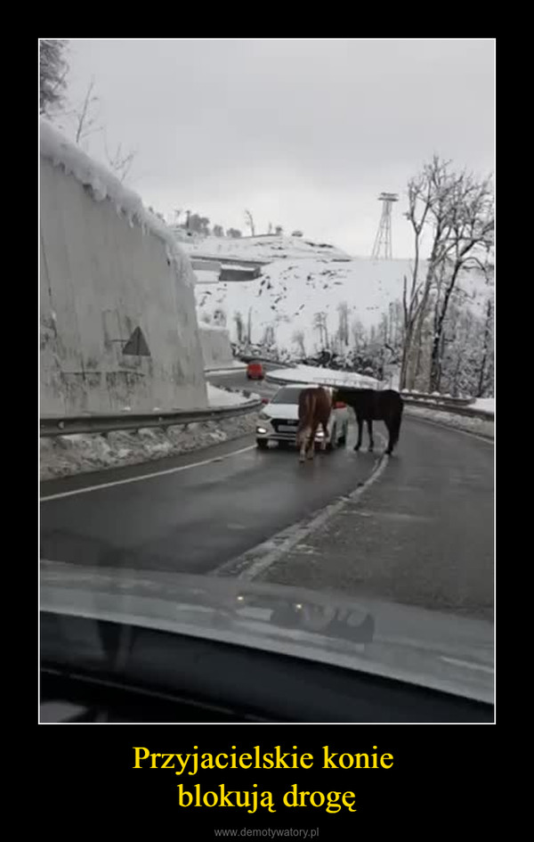 Przyjacielskie konie blokują drogę –