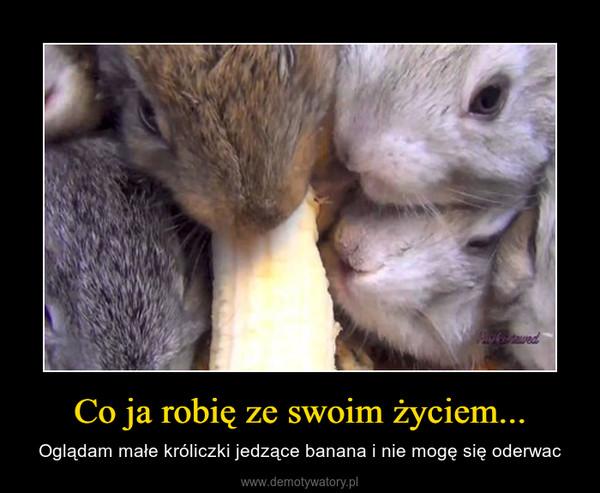Co ja robię ze swoim życiem... – Oglądam małe króliczki jedzące banana i nie mogę się oderwac