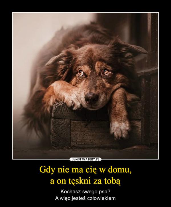Gdy nie ma cię w domu,a on tęskni za tobą – Kochasz swego psa?A więc jesteś człowiekiem
