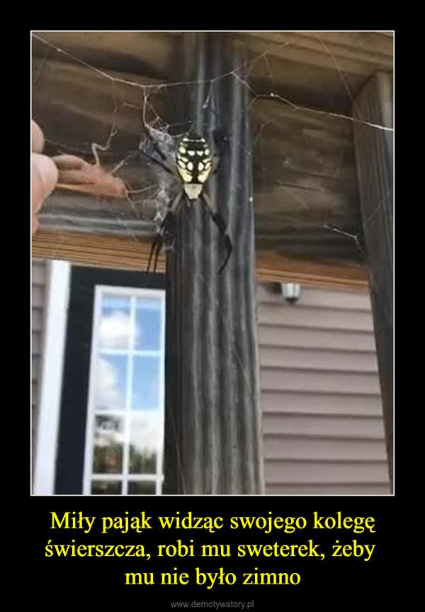 Miły pająk widząc swojego kolegę świerszcza, robi mu sweterek, żeby mu nie było zimno –