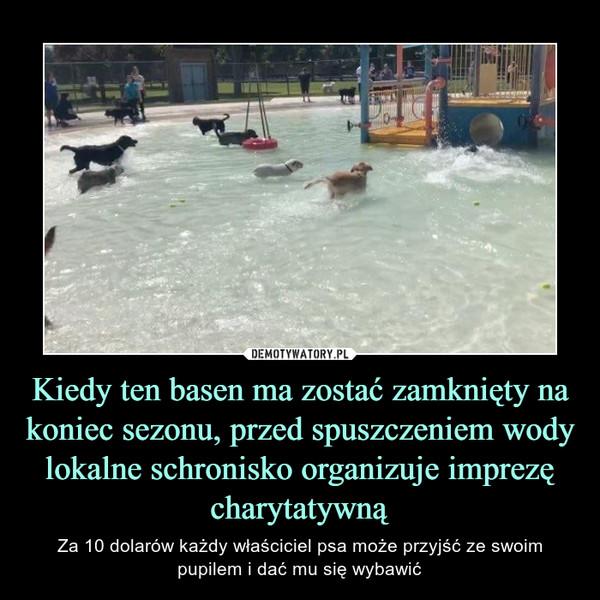 Kiedy ten basen ma zostać zamknięty na koniec sezonu, przed spuszczeniem wody lokalne schronisko organizuje imprezę charytatywną – Za 10 dolarów każdy właściciel psa może przyjść ze swoim pupilem i dać mu się wybawić