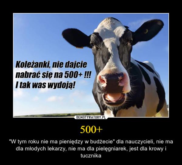"""500+ – """"W tym roku nie ma pieniędzy w budżecie"""" dla nauczycieli, nie ma dla młodych lekarzy, nie ma dla pielęgniarek, jest dla krowy i tucznika"""